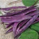 HEIRLOOM NON GMO Blauhilde Bean 25 seeds