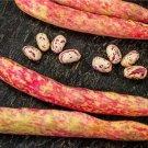 HEIRLOOM NON GMO Borlotto Di Vigevano Nano Bean 25 seeds