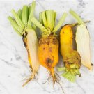 HEIRLOOM NON GMO Giant Yellow Eckendorf Beet 25 seeds