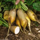 HEIRLOOM NON GMO Yellow Cylindrical Beet 25 seeds