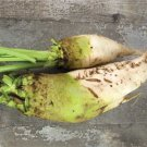 HEIRLOOM NON GMO Zentaur Fodder Beet 25 seeds