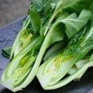 HEIRLOOM NON GMO Canton Bok Choy 100 seeds