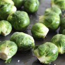 HEIRLOOM NON GMO Groninger Brussels Sprout 100 seeds