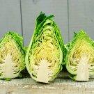 HEIRLOOM NON GMO Greyhound Cabbage 100 seeds