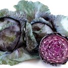 HEIRLOOM NON GMO Mammoth Red Rock Cabbage 100 seeds