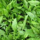HEIRLOOM NON GMO Italiko Rosso Dandelion 100 seeds