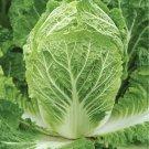 HEIRLOOM NON GMO Chirimen Hakusai Chinese Cabbage 100 seeds
