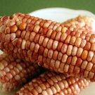HEIRLOOM NON GMO Charapiti Red Michoacan Corn 25 seeds