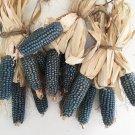 HEIRLOOM NON GMO Mini Blue Popcorn 25 seeds