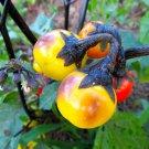 HEIRLOOM NON GMO Black Stem Eggplant 25 seeds