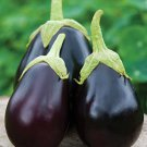 HEIRLOOM NON GMO Kazakhstan Eggplant 25 seeds