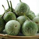 HEIRLOOM NON GMO Lao Green Stripe Eggplant 25 seeds