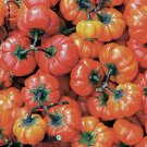 HEIRLOOM NON GMO Red China Eggplant 25 seeds