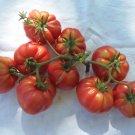 HEIRLOOM NON GMO Red Ruffled Eggplant 25 seeds