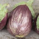 HEIRLOOM NON GMO Tadifi Eggplant 25 seeds