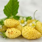 HEIRLOOM NON GMO Yellow Wonder Wild Strawberry 25 seeds