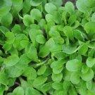 HEIRLOOM NON GMO Corn Salad Dutch 25 seeds