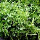 HEIRLOOM NON GMO Pepper Cress 100 seeds
