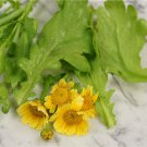 HEIRLOOM NON GMO Large Leaf Tong Ho Greens 100 seeds