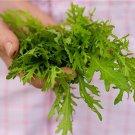 HEIRLOOM NON GMO Mizuna Lime Streaks 100 seeds