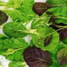 HEIRLOOM NON GMO Siamese Dragon Stir Fry Mix Salad Blend 100 seeds