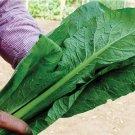 HEIRLOOM NON GMO Nero Di Toscana Cabbage 100 seeds