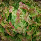 HEIRLOOM NON GMO Bronze Beauty Lettuce 100 seeds