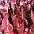 HEIRLOOM NON GMO Cimmaron Lettuce 100 seeds