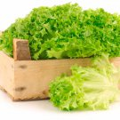 HEIRLOOM NON GMO Lollo Bionda Lettuce 100 seeds