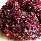 HEIRLOOM NON GMO Lollo Rossa Lettuce 100 seeds