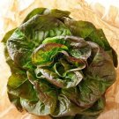 HEIRLOOM NON GMO Merveille des Quatre Saisons Lettuce 100 seeds