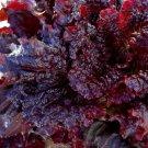 HEIRLOOM NON GMO Midnight Ruffles Lettuce 100 seeds