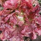 HEIRLOOM NON GMO Mignonette Bronze Lettuce 100 seeds