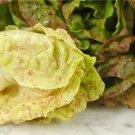 HEIRLOOM NON GMO Sanguine Ameliore or Strawberry Cabbage Lettuce 100 seeds