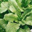 HEIRLOOM NON GMO White Silesian Lettuce 100 seeds