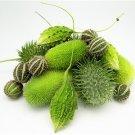 HEIRLOOM NON GMO African Wild Melon Mix 25 seeds