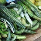 HEIRLOOM NON GMO Snake Melon 10 seeds