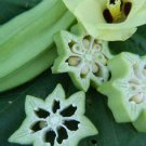 HEIRLOOM NON GMO Abigail's Coffee Okra 25 seeds