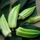 HEIRLOOM NON GMO Beck's Big Buck Horn Okra 25 seeds