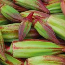 HEIRLOOM NON GMO Hill Country Heirloom Red Okra 25 seeds