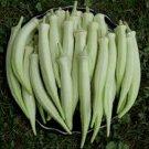 HEIRLOOM NON GMO Stelley Okra 25 seeds