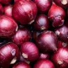HEIRLOOM NON GMO Noordhollandse Bloedrode Onion 50 seeds