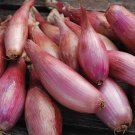 HEIRLOOM NON GMO Red of Florence Onion 50 seeds