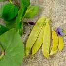 HEIRLOOM NON GMO Golden Sweet Snow Pea 25 seeds