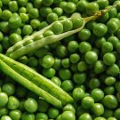 HEIRLOOM NON GMO Laxton's Progress No. 9 Garden Pea 25 seeds