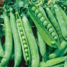 HEIRLOOM NON GMO Sugar Ann Snap Pea 25 seeds