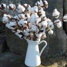 HEIRLOOM NON GMO White Cotton 10 seeds