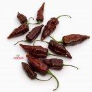 HEIRLOOM NON GMO Chocolate Bhut Jolokia Hot Pepper 15 seeds