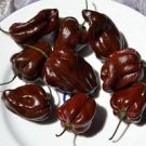 HEIRLOOM NON GMO Chocolate Seven Pot Hot Pepper 15 seeds