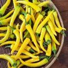 HEIRLOOM NON GMO Golden Cayenne Hot Pepper 15 seeds